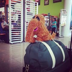 I like traveling with Snuffy and Spade. #katespade #travel