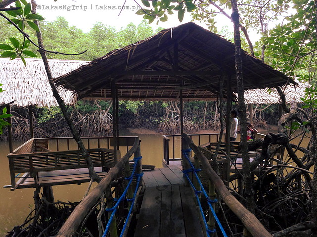 The end of the trail. Mangrove Eco Park, El Nido, Palawan