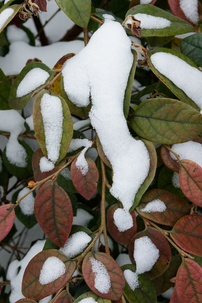 Snow forms punctuation shapes in our garden