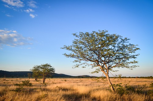 Sunset in the savanna of Namibia