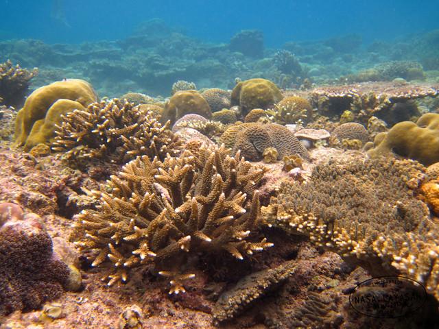 El Nido marine life