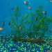 sarasota-fish-tanks-design-install-maintain-florida-2