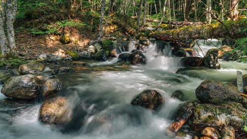 trees motion nature wet water forest canon flow waterfall log rocks pacificnorthwest washingtonstate canonef2470mmf28lusm canoneos5dmarkiii