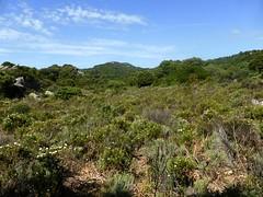 Les anciens terrains d'exploitation de Pastricciola