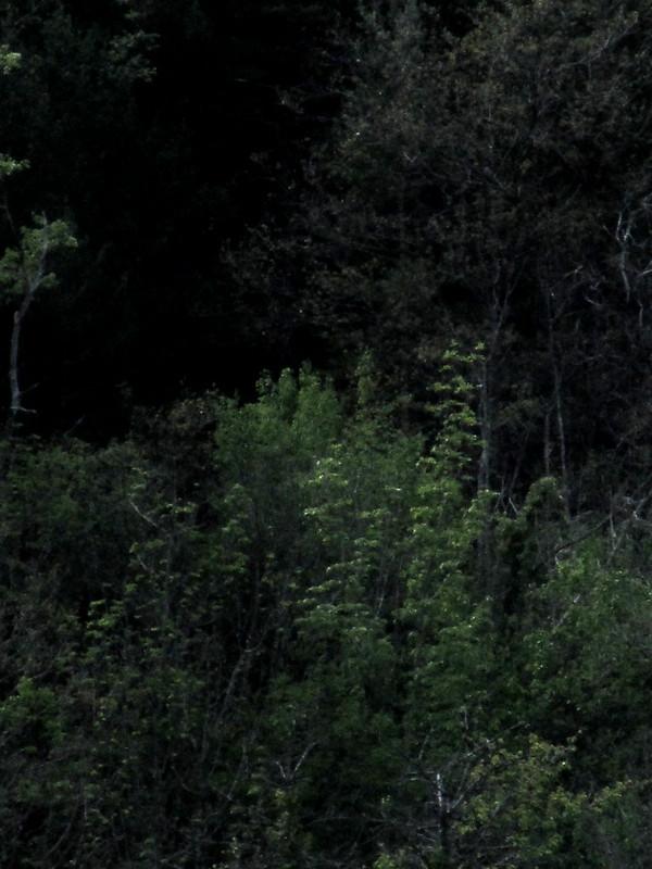 Pintura oscura del monte