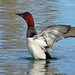 Canvasback Stretch - Martinez Marsh by Ethan.Winning