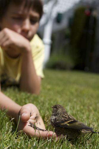 JD Feeding a Pine Siskin