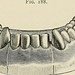 """Image from page 406 of """"A practical treatise on mechanical dentistry"""" (1903) by Internet Archive Book Images"""