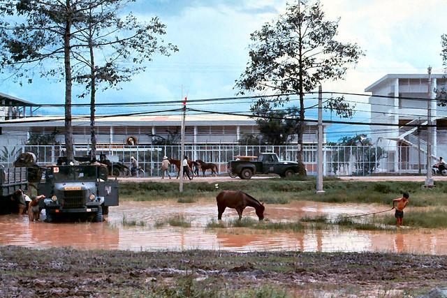 Saigon 1965 - BV Dã Chiến 3 của QĐ Mỹ - Bãi tắm ngựa và rửa xe trong vũng nước mưa