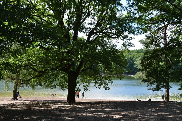 Grunewaldsee Berlin_ shores at the dog lake