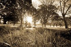 Prince Alfred Park Sepia Process