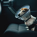 copilot  (explore) by mental_digestion