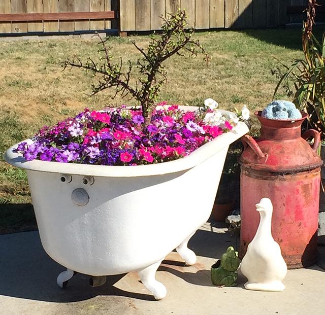 bathtub in bloom - improvised garden planter