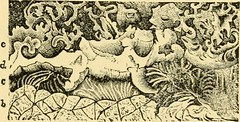 """Image from page 238 of """"Relics of primeval life, beginning of life in the dawn of geological time"""" (1897)"""