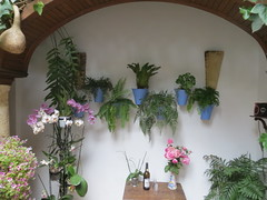 Cordoba, Spain: Patio Festival, part 22