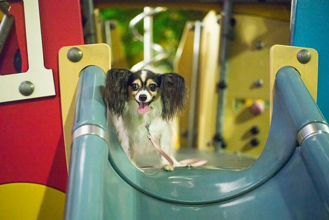 Playground Dog