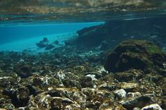 coral reef(0.0), coral(0.0), coral reef fish(0.0), marine biology(0.0), bay(0.0), ocean(1.0), tide pool(1.0), underwater(1.0), reef(1.0),