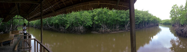 Panoramic view of the end of the Mangrove Eco Park Trail.
