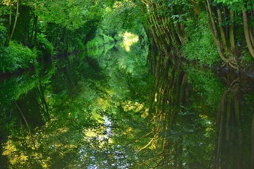 trees reflections boroughbridge cutriver nikond600 uresycamoresash