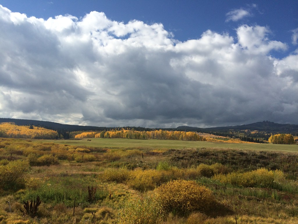 Colorado, fall, aspens,