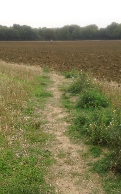 Farmer wants a ploughed field...