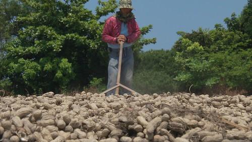 讓作物適時耕作的緩慢農法