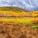 """Midway reservoir fall colors by Scott Stringham """"Rustling Leaf Design"""""""