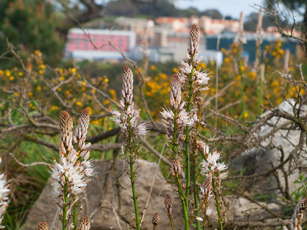 Flores. #flowers #primavera #spring #coruña