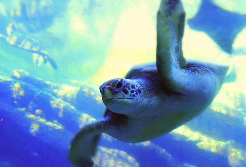 Turtle, uShaka, Durban