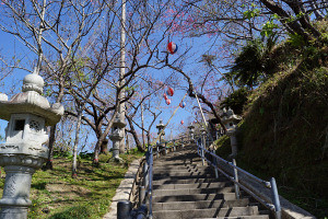 Japan's First Sakura: Central Nago Park - Okinawa, Japan