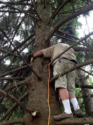 TreeTrimming-3