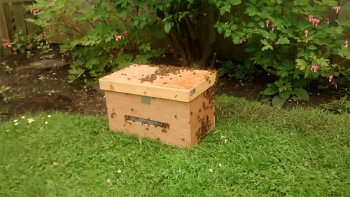 swarm box June 14