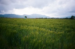 Common Grains posted a photo: