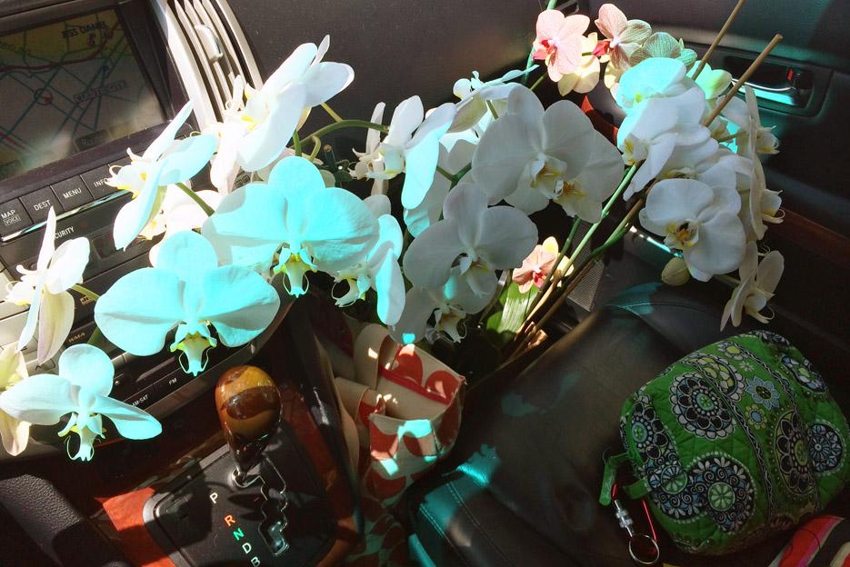 051314_orchids04