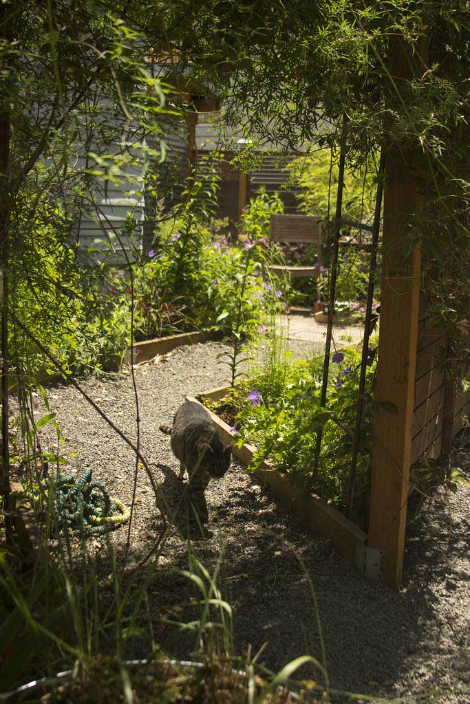 Backyard Sunny