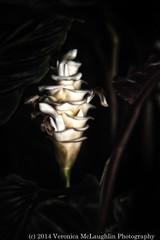 Wintergarden-fb-18
