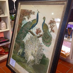 I don't mind this #peacocks #print