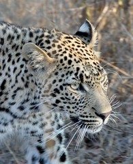 SOUTH AFRICA - Sabi Sands & Notten's Bush Camp