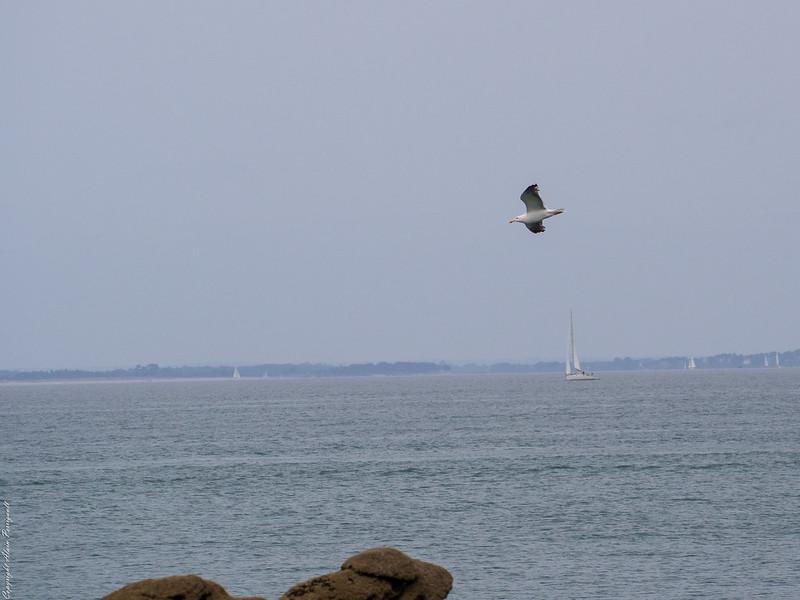 Dans le Golf du Morbihan 14599456348_fbab066f83_c