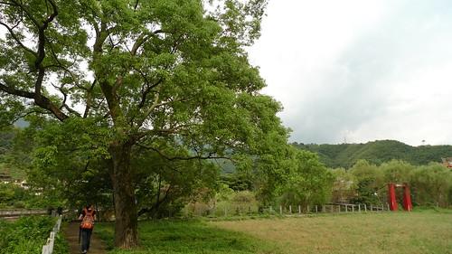 20140719-義民廟旁之河濱公園 (3)