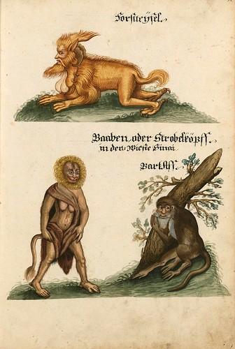 007-Aquarelle von Säugetieren…- e-manuscripta-Bibliothèque électronique suisse
