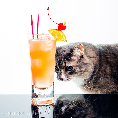 Straits Sling Cocktail with kitty photobombing the set
