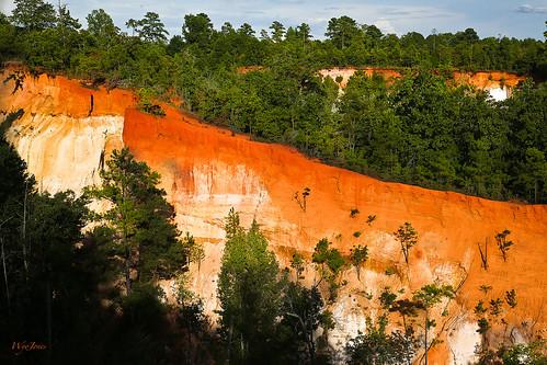 pink trees red orange usa white georgia sand flute canyon redclay erosion ridge clay strata np silt gully lumpkin georgiaclay unconformity providencecanyonstatepark streamerosion wyojones providencecanyonstateoutdoorrecreationarea