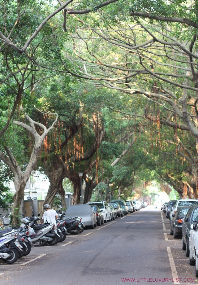 Taipei tree lined street by little luxury list