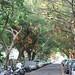 Taipei tree lined street by little luxury list