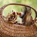 basket of golden roses