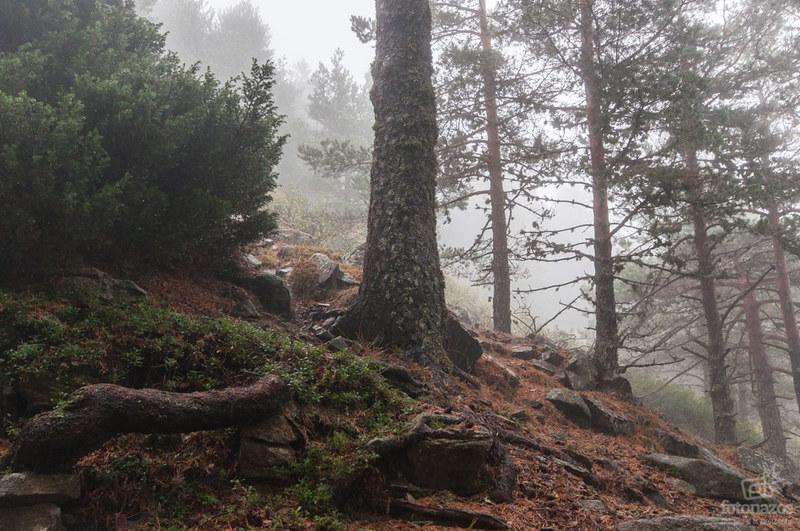 Paseo por la Sierra de Guadarrama