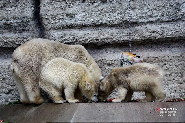 Eisbären Giovanna mit Nela&Nobby 2014_09_10 383