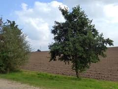 Landwirtschaft im Rheinland