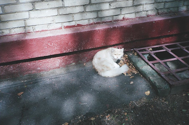 «Cat from the Luigi Longo Street»